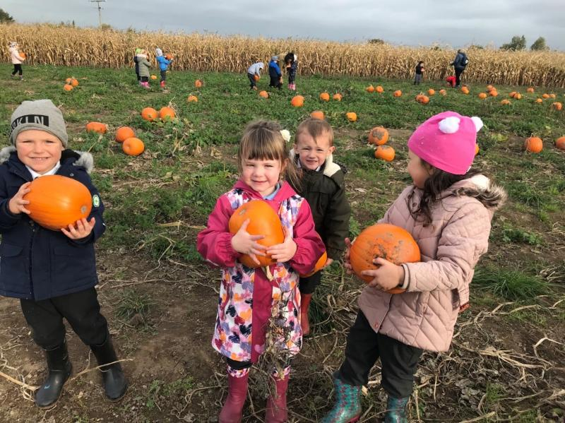 St Giles' Primary School pick their own pumpkins
