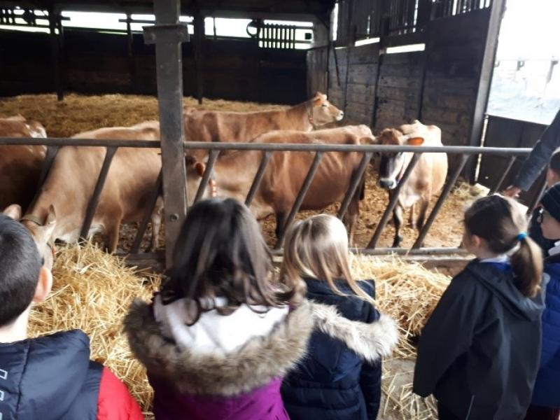 YoGA helps children discover food, farming and the countryside