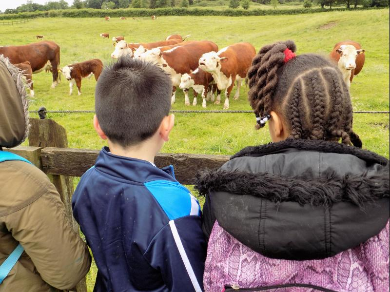 Country Trust accepted as members of the Fair Education Alliance