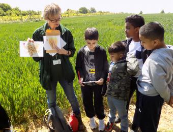 "A Tower Hamlets school learns about ""field to fork"" on their farm visit"