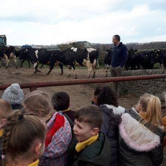 The parade of cows at peepy farm with st. marks primary yr 1 children  pp 6.3.20